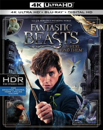 Fantastic Beasts and Where to Find Them 4K 2016 Ultra HD 2160p